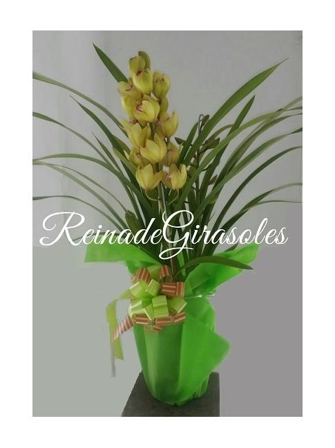 Orquideas-48