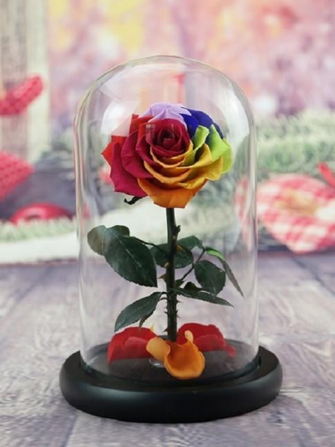 10. Rosa de COLORES Preservada